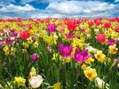 La primavera y el cambio climático
