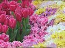 Comparamos las flores