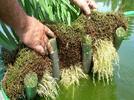 2380-deduce-metodos-para-detectar-separar-o-eliminar-sustancias-contaminantes-en-diversos-sistemas-a
