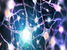2083-identifica-las-funciones-de-la-temperatura-y-la-electricidad-en-el-cuerpo-humano
