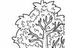 Expresar con sus ideas cómo y por qué cree que se caen las hojas de los árboles