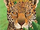 1394-comprende-el-significado-del-termino-biodiversidad-propone-acciones-para-contrarrestar-las-amen