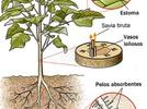 713-describe-las-principales-semejanzas-y-diferencias-entre-plantas-y-animales