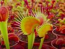 570-clasifica-objetos-animales-y-plantas-por-su-tamano