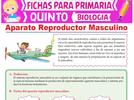 1151-describe-los-cambios-que-presentan-mujeres-y-hombres-durante-la-pubertad-menstruacion-y-eyacula