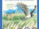 ¿Cómo descubrir, reconocer y disfrutar a las aves?