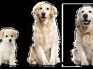 El crecimiento de un cachorro