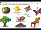 209-describe-y-explica-las-caracteristicas-comunes-que-identifica-entre-seres-vivos-y-elementos-que-