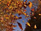 ¿Por qué se caen las hojas de los árboles?