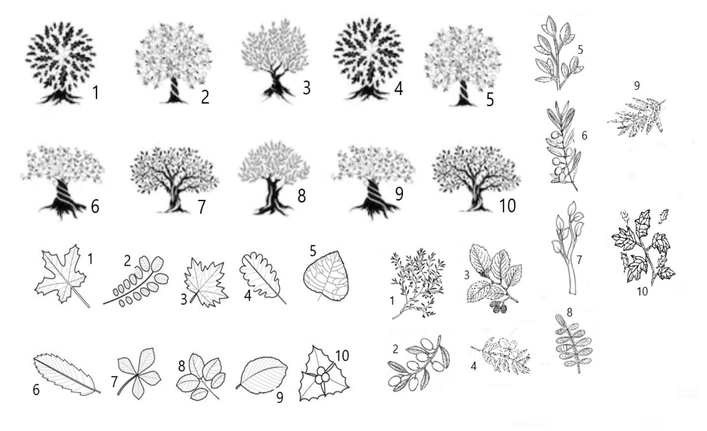 %C3%81rboles%2C+ramas+y+hojas.jpg